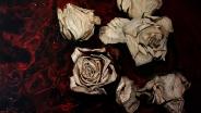 Екатерина Kamington. Закат роз.